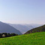 Profi-Rasen für sattes Grün